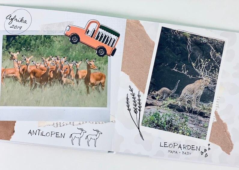 Tiere Afrika